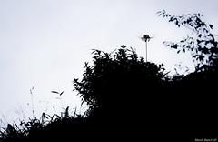 / Lycoris radiata (March Hare1145) Tags: flower  plant     monochrome blackandwhite  silhouette