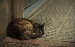 No Time For Repose? (Wilickers) Tags: canon 60d buenos aires argentina travel street photography animal cat blur selective focus vignette urban city sidewalk tiles wall peace rest