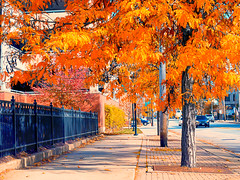 on_the_avenue (gerhil) Tags: cityscape landscape scenic urban street view color autumn november2016 outdoor 1001nights 1001nightsmagiccity
