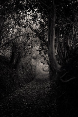 20161027-115058 (aderixon) Tags: natureplanttree natureseasonautumn transportpath laugharne walesuk dark mysterious