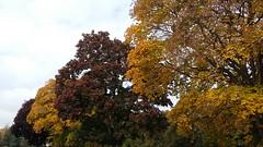 Autumn Trees in Leamington (zoeboulton) Tags: autumn fall foliage colours color orange trees nature town warwickshire england