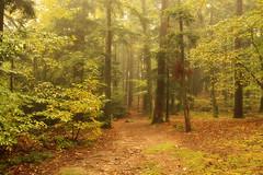 September Morning Mist. (maureen bracewell) Tags: autumn france fog forest mist track trees path september leaves maureenbracewell nature countryside wood