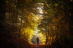 autumn passage (Chrisnaton) Tags: autumn autumncolors autumnforest hiking forest foresttrail forestpath patnetwalk backpack autumngate