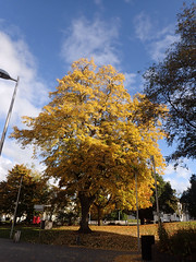2016_10_230010 (Gwydion M. Williams) Tags: coventry britain greatbritain uk england warwickshire westmidlands autumn