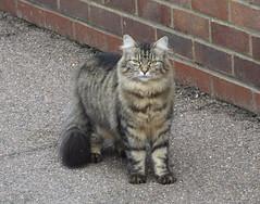 DSCF1393 (Moldovia) Tags: fujifilmfinepixhs50exr bridgecamera cat feline animal pet catnipaddicts catspotting catpix catalog catmoments catsunleashed eyes ears whiskers paws tail