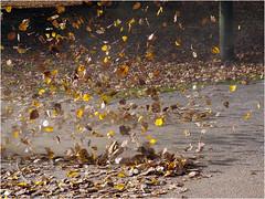 DM-44 Turbulence (Dominic@Caterham) Tags: turbulence leaves autumn