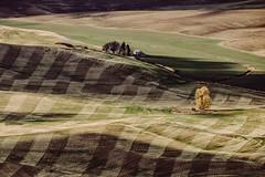 Plaid Flannel (Pedalhead'71) Tags: plaid flannel steptoe washington landscape garfield unitedstates us palouse