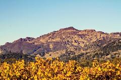 Wine country (Starrgalla) Tags: california grapegrowingregion mountainous mountains mountain autumnal autumn leaf grapeleaves vines vineyards vineyard country wineries winery wine winecountry