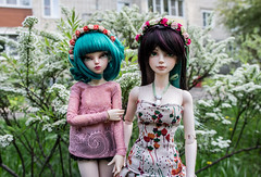 Friends (- ) Tags: bjd iplehouse tania alicecatwell fairyland rheia effy minifee