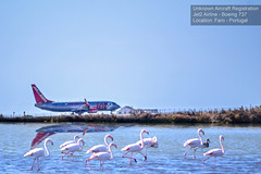 Airplanes Series #02 (Read description for details) (Mark & Cy Photos) Tags: abandoned alkali animal animalia architecture area bird blue blurred body building composition crafts dry earth effect environmental exterior facility feather feature fence flamingo flamingos flat focus formation framing front general geological grass greater horizontal house lake land landscape life light marine natural orientation outdoor pan phoenicopteridae phoenicopteriformes phoenicopterus photo place plant reflection roseus ruins salt setting site sky skyline state structure time travel vegetation view water weather wild wildlife worldartscraftsphotographysettingskylineexterioroutdoorphotogenrestyletypewildlifetravellandscapelifegeneralorientationlightingnaturallightframingcompositionenvironmentalformathorizontalfocusblurredeffectreflectionangleview airplane aircraft plane airport