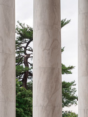 Tree near Jefferson Memorial (Citizen 4474) Tags: plants white tree monument leaves pine architecture dc washington foliage frame nationalmall marble pillars subjects jeffersonmemorial vacationstravel