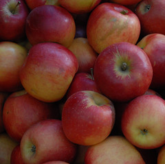Apples (rochpaul5) Tags: new york autumn food ny fruit farm finger lakes harvest health bounty apfel pomme