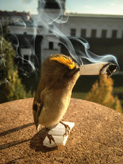 Bird Smoking I (vickarsdominic) Tags: bird shadows taxidermy cigarettesmoke