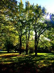 Fall in the Park (www.metaphoricalplatypus.com) Tags: park autumn trees fall scenery colours seasonal natuer