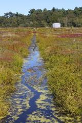 Water for the bogs (Read2me) Tags: she autumn water landscape stream farm norwell cye gamewinner cranberrybog friendlychallenges thechallengefactory pregamesweepwinner challengeclubwinner