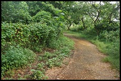 Stinky pathway @  Maharashtra Nature Park (Indianature14) Tags: india nature forest october bombay maharashtra mumbai 2015 cityforest mmrda indianature mahimnaturepark maharashtranaturepark mumbaiforest