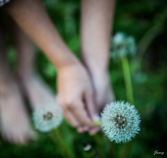 Make A Wish... (❀Janey Song) Tags: park autumn nature girl grass kid dandelion makeawish grassfield glenmorepark vancouvercanada omot canon247028 canon5dmarkiii