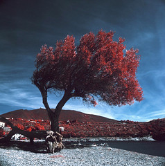 Port- Lligat (santisss) Tags: bw orange color film kodak hasselblad filter expired cadaques portlligat eir 099 503cx infrarred hasselblad503cx aerochrome