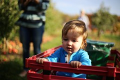 IMG_3953 (AaronStone18) Tags: thanksgiving family autumn light portrait baby sunlight fall apple beautiful kids 50mm creative orchard toddlers 2015 thanksgiving2015