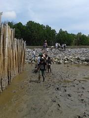 10.12.2015-AngloSingapore-BangPu-100 trees (7) (pattfoundation2014) Tags: thailand education mangrove treeplanting bangpu pattfoundation anglosingapore