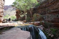 Grand Canyon 2015 785