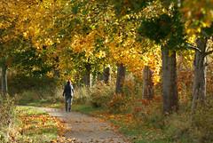 It is Autumn alright (Jaedde & Sis) Tags: autumn path behind challengefactorywinner thechallengefactory