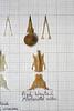 PiedWagtail (JRochester) Tags: skeleton skull alba bones bone pied pelvis wagtail sternum mandible motacilla