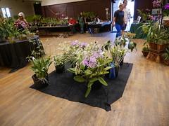 P1100047 (cieneguitan) Tags: flora lan bunga orkid flowershow okid angrek anggerek