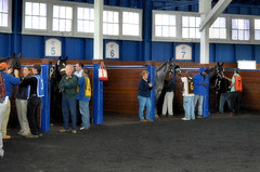 2015-12-13 (7) the paddock at Laurel Park (JLeeFleenor) Tags: photos photography md marylandracing marylandhorseracing laurelpark laurelracecourse horses thoroughbreds equine equestrian cheval cavalo cavallo cavall caballo pferd paard perd hevonen hest hestur cal kon konj beygir capall ceffyl cuddy yarraman faras alogo soos kuda uma pfeerd koin حصان кон 马 häst άλογο סוס घोड़ा 馬 koń лошадь paddock maryland