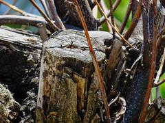 Arbol seco. (jagar41_ Juan Antonio) Tags: planta arbol madera
