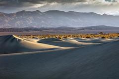 Dune Field Edge (Kirk Lougheed) Tags: california deathvalley deathvalleynationalpark grapevinemountains mesquitedunes mesquiteflat usa unitedstates dune landscape mountain nationalpark outdoor sand sanddune
