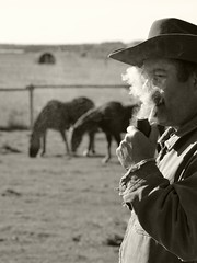 In the pasture (hunter_185) Tags: tobaccopipe pipe pipesmoking tobacco horses ranch cowboy
