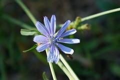 Nature (NickDack) Tags: fiore fioritura flowers