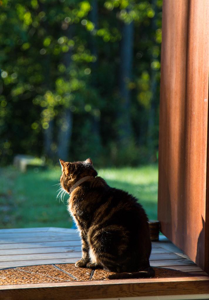 The doorkeeper (little.miss.linda) Tags: cat door doorkeeper katt & The World\u0027s most recently posted photos of doorkeeper - Flickr ... Pezcame.Com