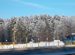 Winter forest near the road (IgorTravkin) Tags: asphalt backgrounds blue cold column covering fence forest frost highway horizontal image january journey landscape landscapes light nature outdoors pale photography pillar pole post road roadside scenics season sky snow symbol tree weather white winter woods yellow crown spire