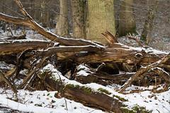 ckuchem-7666 (christine_kuchem) Tags: asthaufen baumstamm eis forst frost haufen holz staatsforst stmme tiere unterschlupf wald wasser wildnis winter winterschlaf winterwald gefroren gewsser kalt naturnah reif schnee wild ste