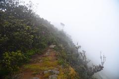 DSC_3270 (UdeshiG) Tags: mountain hike hillcountry teaestate mist sambar eagle hortonplains ohiya sunrise sky haputale nikon trek adisham
