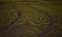 SOUPLeSSe. (Warmoezenier) Tags: agriculture landbouw souplesse vorm