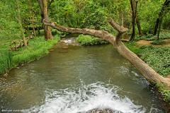 2195  Monasterio de Piedra, Zaragoza (Ricard Gabarrs) Tags: agua water rio rios natura naturaleza arbol arboles ricardgabarrus olympus ricgaba