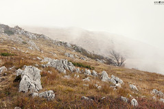 23 Dry Mountain Fog (kana movana) Tags: dry mountain serbia balkan forest tree fog foggy weather fall autumn mountaineering walk tracking nature outdoor travel journey climbing d90
