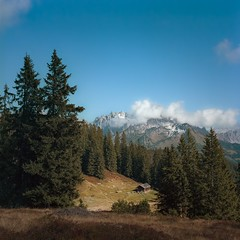 Schferhtte am Gerzkopf (cardijo) Tags: austria sterreich salzburg filzmoos landscape landschaft mountain berg baum tree film analog hasselblad planar kodak portra160 nikon coolscan