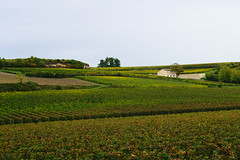 Vinyards and fields, St. Emilion, France (AdamHGrimes) Tags: france nature landscape wine vinyards saintémilion