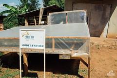 UG1605_224 (Heifer International) Tags: uganda ug