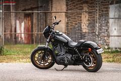 Harley Davidson Screamin Eagle (spotandshoot.com) Tags: 2wheels australia harleydavidson portadelaide southaustralia automotive bike motorbike adelaide sa