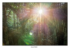 Yeah! (Laurent Asselin) Tags: fort arbres rayons lumire soleil plantes paysage guyane