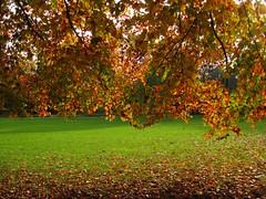 Autumn Colours, Explored on Oct. 21.st 2016 (Hannelore_B) Tags: herbst autumn laub baum tree