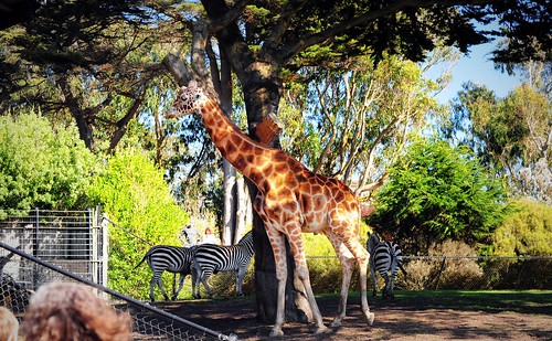 Thumbnail from San Francisco Zoo