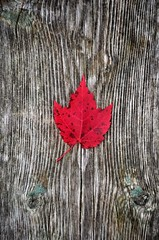 Red Leaf On Barn Board (Christian Stepien.com) Tags: 2016 stepien canada kawartha d5100 christian nikon ontario color sturgeonlake colour nature fall cottage country autumn