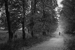 Bike Ride (ukasz Babula) Tags: poland autumn october wood woods forest tree trees plant road trail path bike man landscape outdoor countryside nature natural serene peaceful blackandwhite black white bw nikon d60 nikkor 1855 monochrome