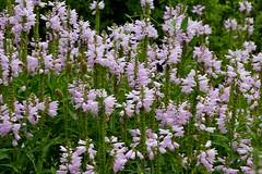 Botanic Garden, Denver (pmenge) Tags: flores flowers co botanicgarden 18135 xt1